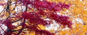 Autumn foliage in New Haven
