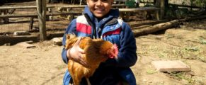 A boy and a chicken at Common Ground Urban Farm