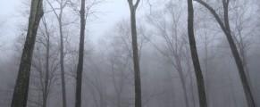 Fog on Wednesday