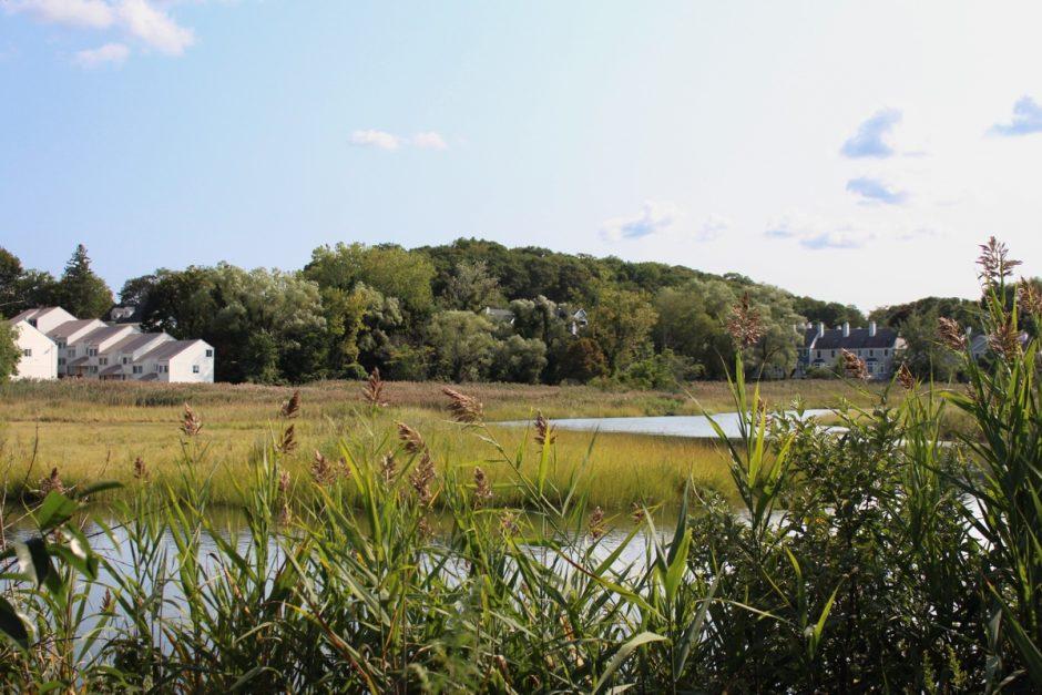 Quinnipiac Meadows, New Haven